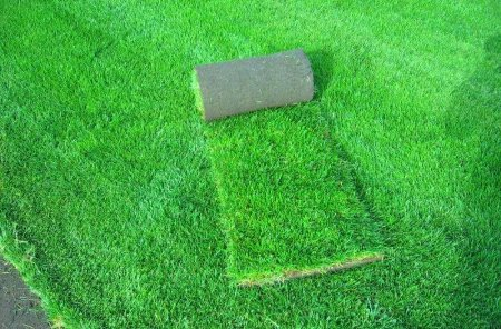 Рулонный газон: особенности ухода и эксплуатации