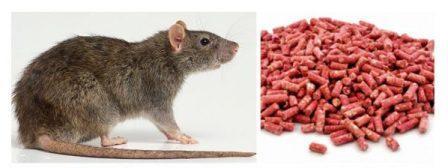 Средства от мышей: краткое описание.