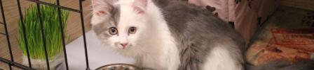 С кем оставить домашнего кота на время вашего отсутствия дома?